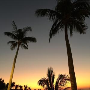 沖縄南国生活@blog