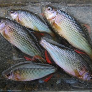 いつも魚が釣りたい