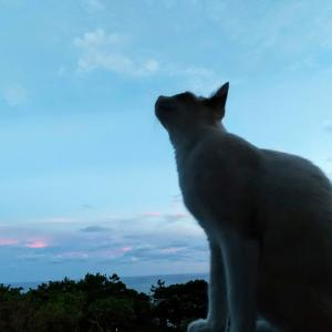 空の青と本当のきもち。