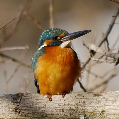 bird21さんのプロフィール