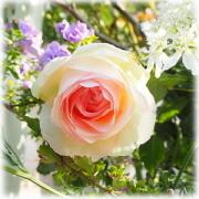 ロゼのバラ庭ブログ