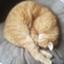 ARASICK_Turf-chan's blog