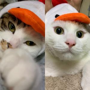 猫とウサギのブログ