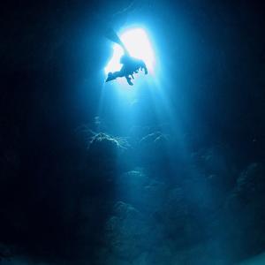 スローな沖縄本島のダイビングを1組限定で開催中です!