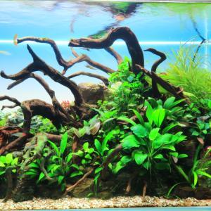 Kamatarinahan aquarium blog