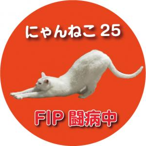 にゃんねこ25@猫伝染性腹膜炎(FIP)闘病記録