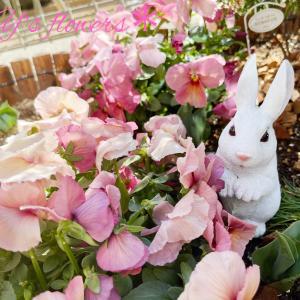 ..*..お花を楽しむ..*..