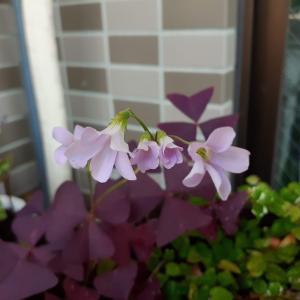花好きさんの庭日記