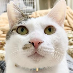 保護猫紹介ブログ☆みんにゃ里親募集中!【大阪/関西】
