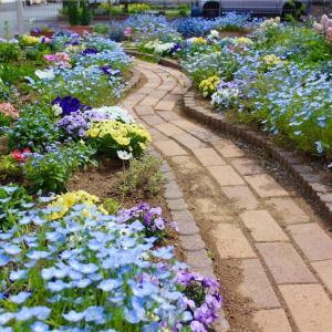 よっちゃんの庭