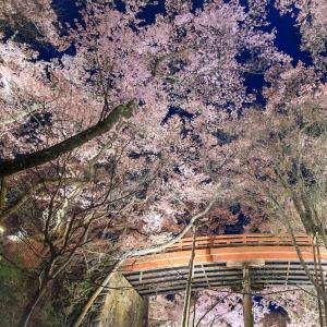 日本の四季を巡ろう