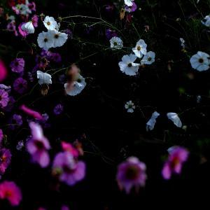 信州 駒ヶ根の風景写真など