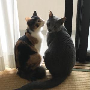 鈴木家の双子と猫たちの日常