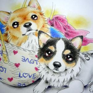 C-style*シニア犬お散歩ブログ