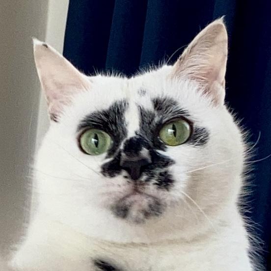Muddy Catさんのプロフィール