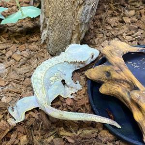 爬虫類ちゃるブログ