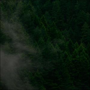 トイトブルクの勉強の森