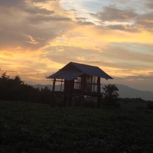 【プーケット】田舎生活サバイバル|タイでの日常・子育て・教育について