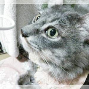 ももりんチャンネル猫の長生きお助けブログ