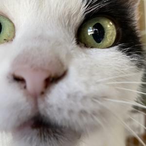 野良猫出身★てらねこたちのマタ〜りな日々