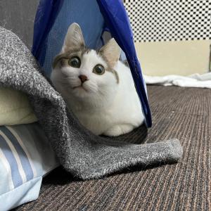 元保護猫さんと発達障害者のブログ