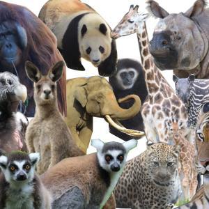 zoo zoo diary|動物園と豆知識
