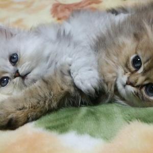 ニャンとも愛猫