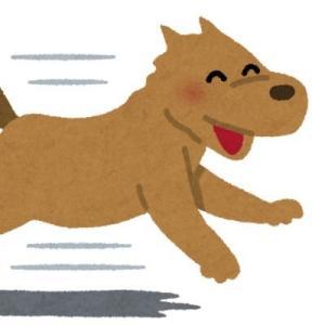 逃げ犬🐕自由に生きるためのブログ