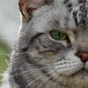 猫たちから【癒し】のお届け物