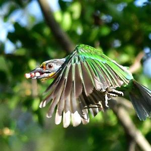 趣味の野鳥観察 ブログ