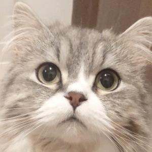 夕凪おもいで猫缶詰〜心筋症闘病中〜