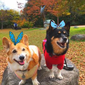 シニアコーギー犬&ミックス保護犬&介護ママの奮闘日記
