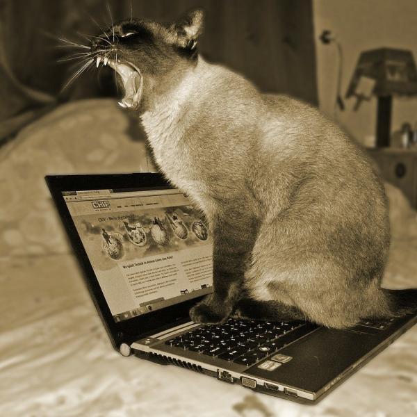 ネタこもりブログ管理人さんのプロフィール
