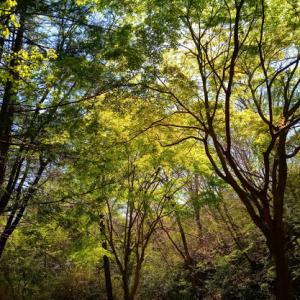 森の中で想う