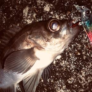 FishingKELUARGA