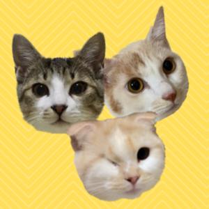 あずきなこラテ〜わがまま猫たちの日常〜