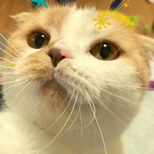 satoneko◆猫ブログ