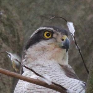 新しい鳥写真