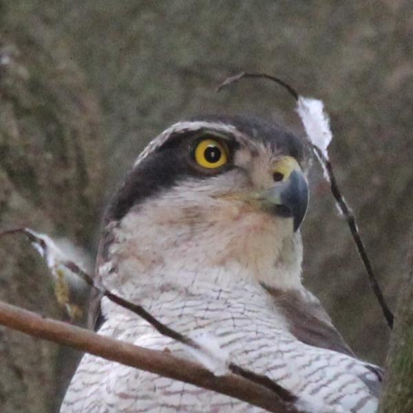 新しい鳥写真さんのプロフィール