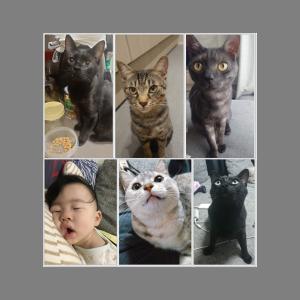 猫と子供とお家で充実時間☆たかまるブログ♪