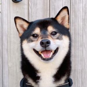黒柴犬の琥大朗(こたろう)ブログ