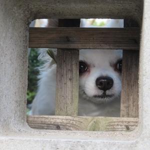 愛犬ナナとハチコのワンダフルわん生旅ブログ