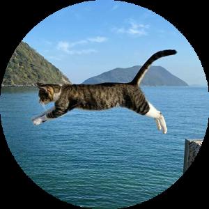 メンタル猫blog