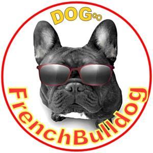 フレンチブルドッグ子犬を探しているなら!【Dog∞/ドッグエイト】