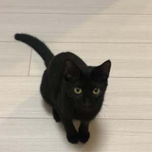 黒猫鶴子の成長期