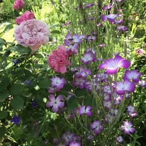 至福の庭と大自然と時々ねこ