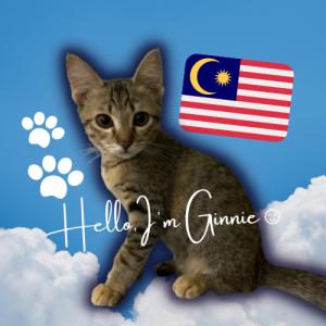 マレーシア 猫と暮らすKLライフ