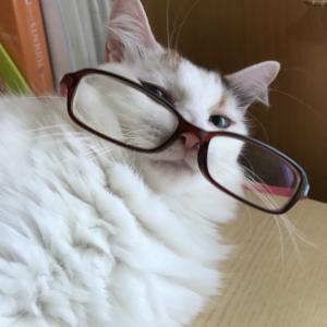 7歳ネコのリンパ腫闘病記録とネコに関わる話