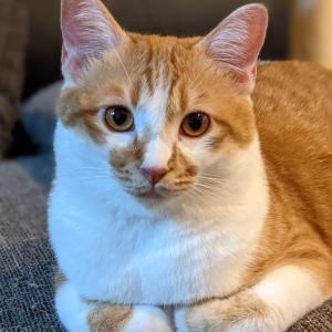 肥後もっこす猫のスローライフ