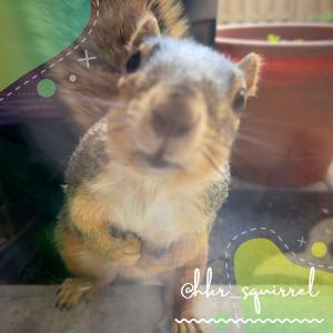 Drey@hkr_squirrel